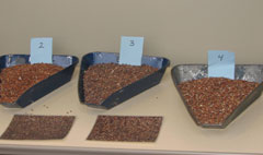 Image of Sorghum Samples