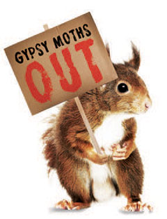 Image of a squirrel holding sign that says Gypsy Moth Out